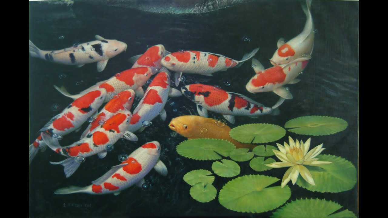 Youtube for Koi pond designs south africa