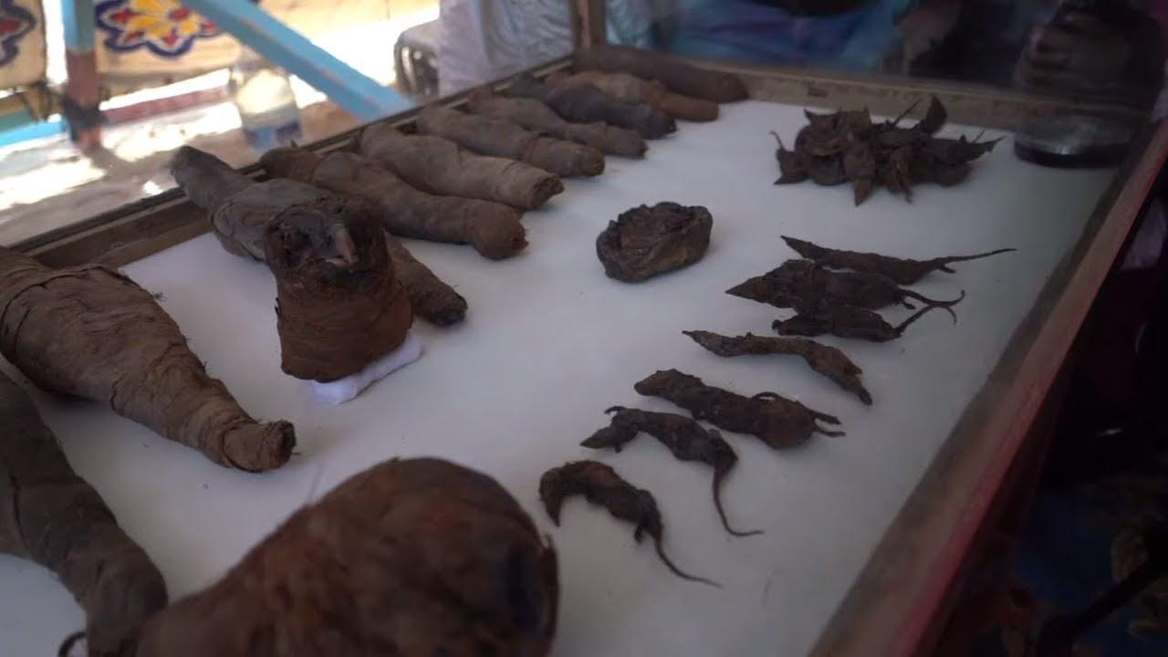 Grabkammer mit etwa 40 Mumien in Ägypten entdeckt