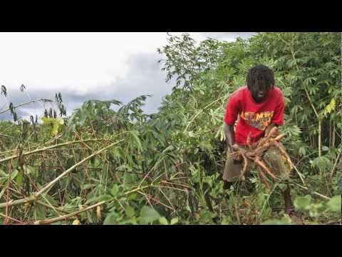 Economics of Food Security in Jamaica