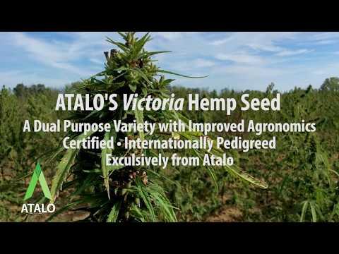ATALO'S Certified, Pedigreed, Proprietary Hemp Seed for CBD and Grain