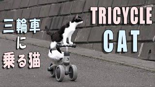Tricycle Cat【amazing】 三輪車に乗る猫【すご技 かわいい】