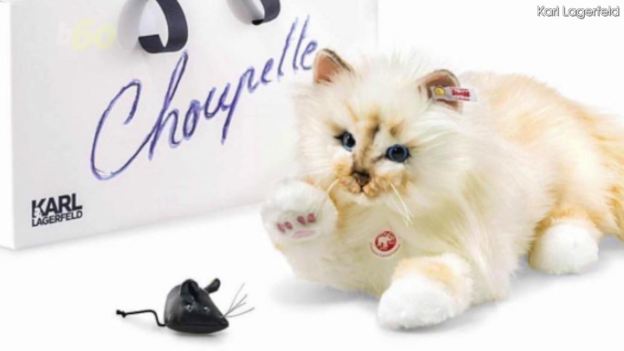 Lagerfelds karl newest choupette video advise to wear in everyday in 2019