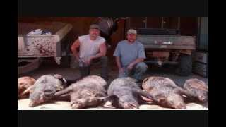 Hog Hunt, wild hog hunts in Texas