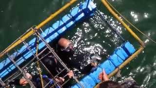 Sud Africa : lo squalo bianco