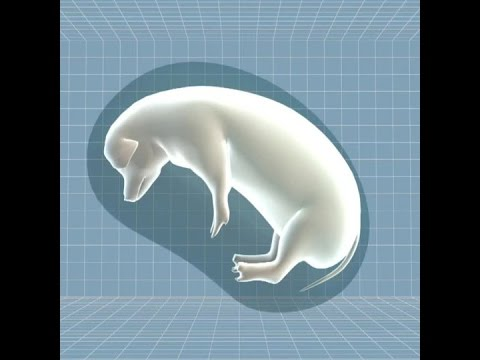Animals that grow designer organs for humans are a step closer Hqdefault