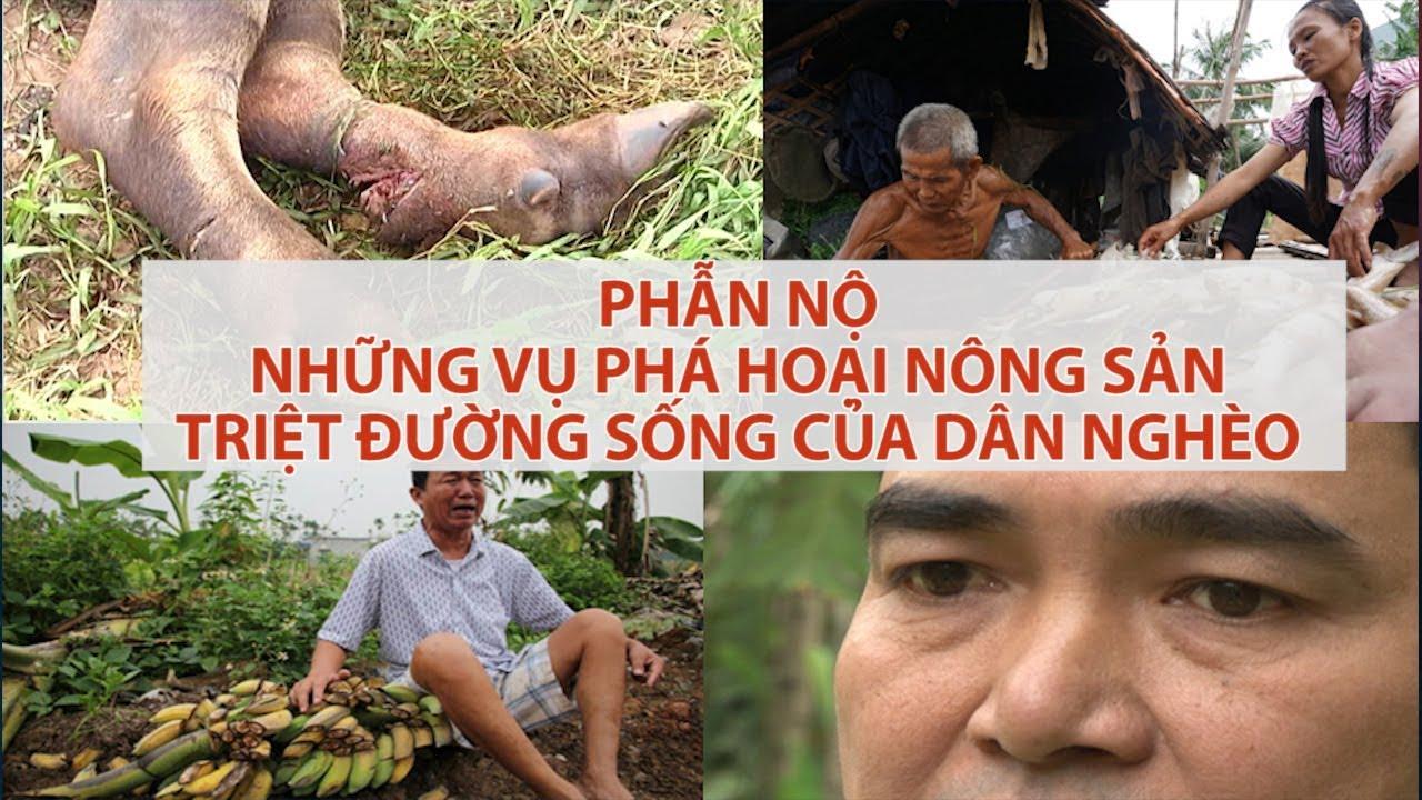 PHẪN NỘ: Phá hoại nông sản, triệt đường sống dân nghèo   VTC16