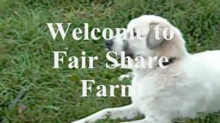 The Fair Share Farm Csa