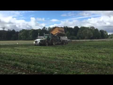 2015 organic green been harvest western Washington