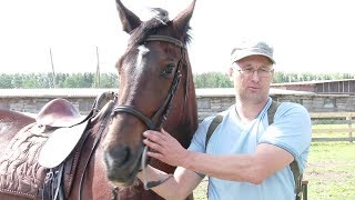 Ферма «Дальний хутор» в Нижней Салде. Конные прогулки и обучение верховой езде