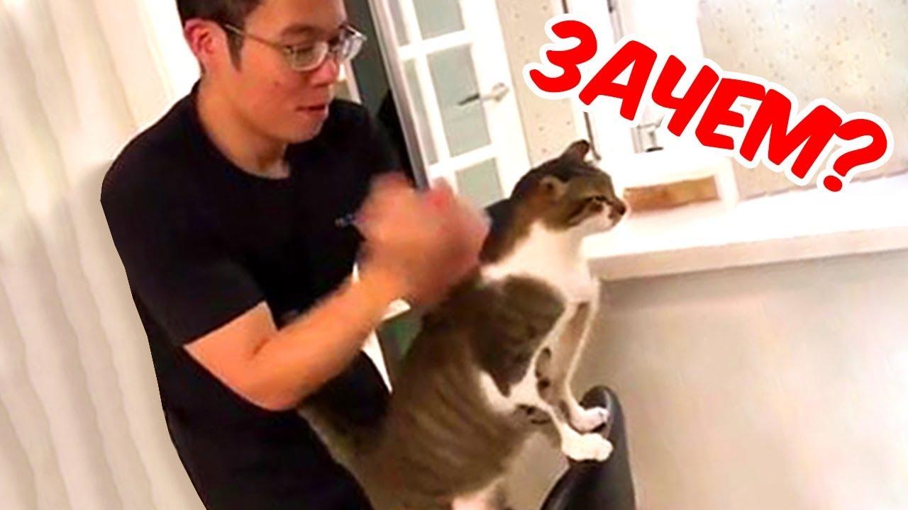 Кошки ЗАХВАТЫВАЮТ мир?! Самые ЭПИЧНЕЙШИЕ приколы.