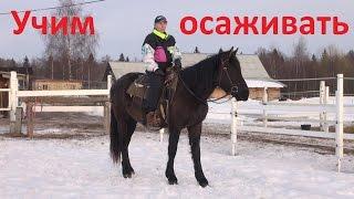 Учим лошадь осаживанию (задний ход)