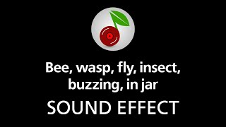 Bee, wasp, fly, insect, buzzing, in jar, sound effect