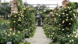 港の見える丘公園(横浜)でバラ園(イングリッシュガーデン)が開催されました。美しい薔薇が咲きほこっています。黄色い薔薇のアーチは特...