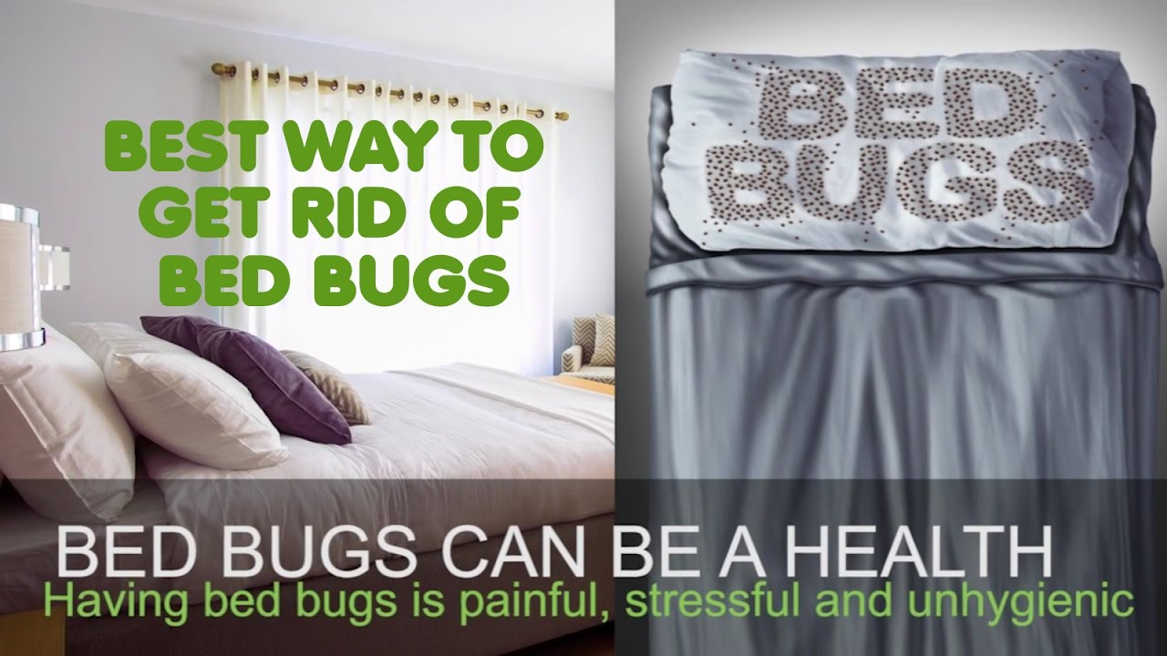Best Way To Kill Bed Bugs Get Rid Of Bedbugs Skin And Beauty Center Everyday Health Regarding
