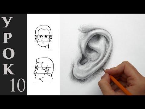 Как нарисовать ухо ребенку