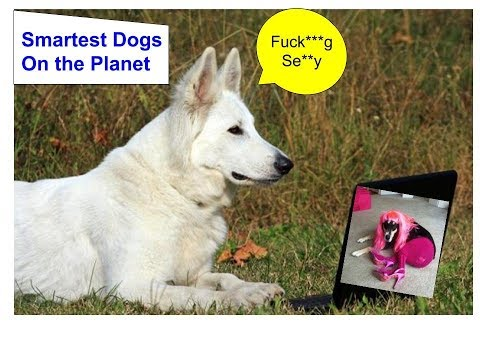The Smartest Dogs On the Earth - Dogs Smartness