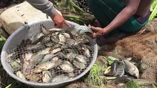 Top 10 Viral Video 2017 | AMAZING Net Fishing Cambodia | Top10 Cambodia Traditional Fishing