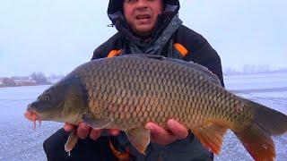 Рыбалка зимой. Ловля огромных карпов со льда