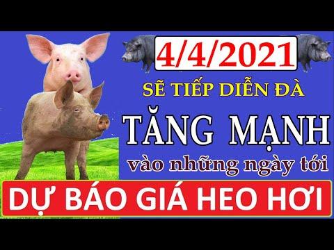 Dự báo giá heo hơi ngày 4/4/2021 | Giá lợn hơi sẽ tiếp diễn đà tăng mạnh vào những ngày tới