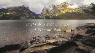 The Wolves That Changed Rivers