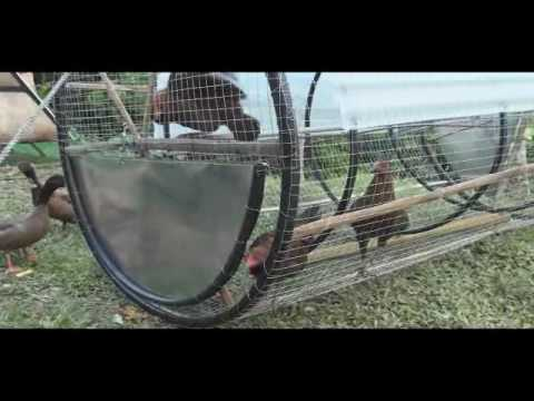New ideas for Urban farming a mobile animal coop