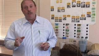 Flea Control : How to Kill Fleas With Sevin