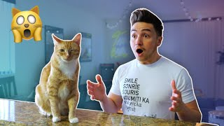 If CATS Could talk | Smile Squad Skits