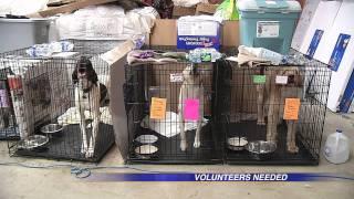 Animal Shelter Needs Volunteers