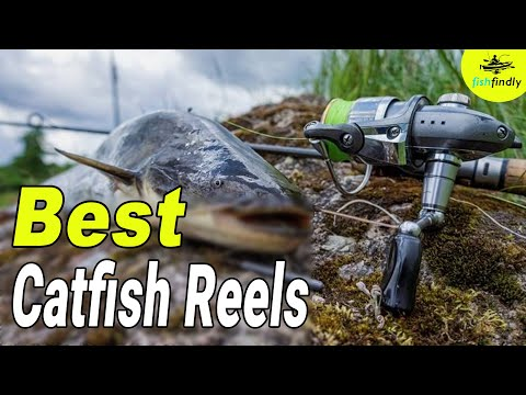 Best Catfish Reels In 2020 – Excellent Guides From Experts!
