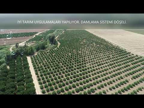 ERHAN YILDIRIM'DAN TARSUS YENİCE'DE SATILIK 55 DÖNÜM NARENCİYE BAHÇESİ