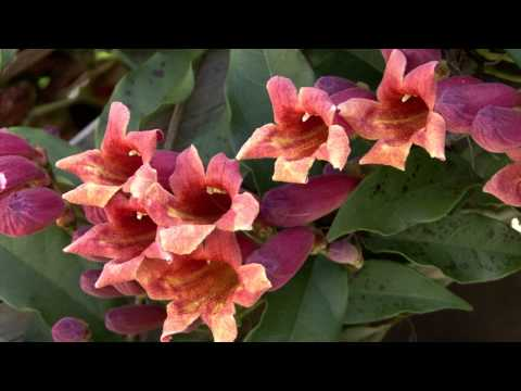 Backyard Warmth - Southern Gardening May 11, 2014