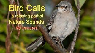 Bird Calls of Nature Sounds screenshot 3