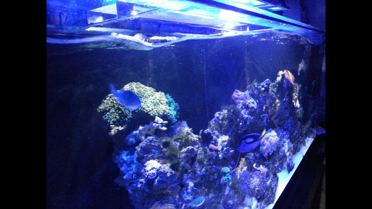 Aquarium fish tank wavemaker - Aquarium Fish Tank Wavemaker