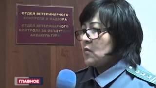 КАЛМЫКИЯ ПРОВЕРКА РАЙПО