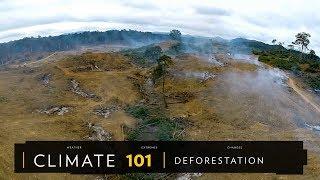 101氣候教室:森林砍伐《國家地理》雜誌