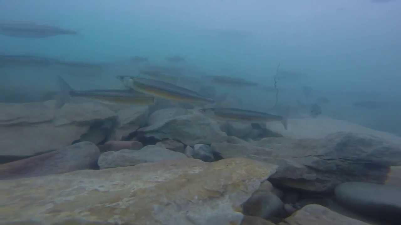 Gopro bear lake cisco fishing youtube for Utah fishing regulations