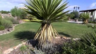 Formal Garden, El Paso Botanical Garden