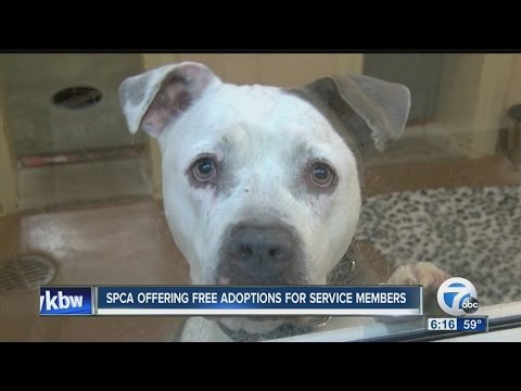 Free Pet Adoption For Members Of The Military