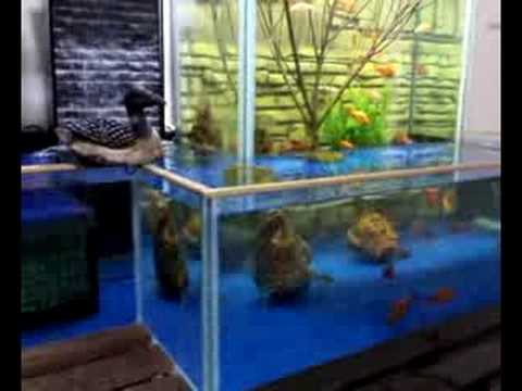 FISH TANK OPEN BOTTOM   YouTube