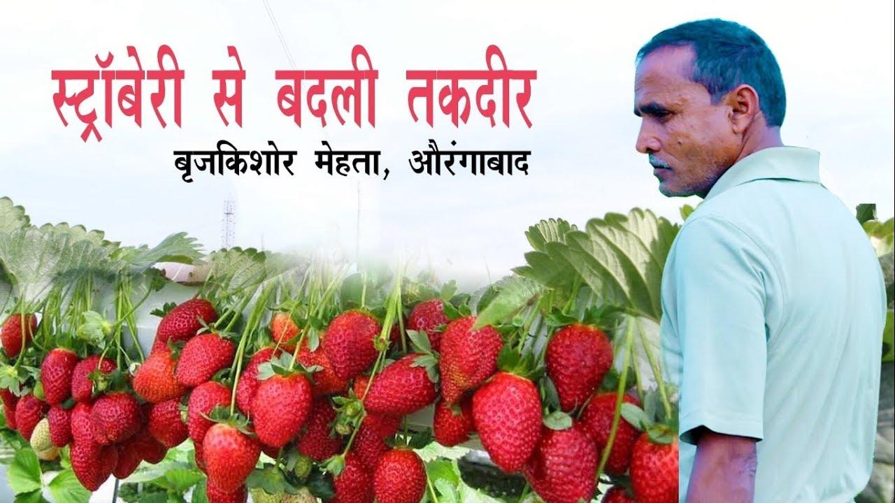 The Story of a strawberry farmer (स्ट्राबेरी की खेती से बदली तक़दीर : ब्रजकिशोर मेहता, औरंगाबाद)