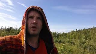 Три самые большие опасности в лесах Ленинградской области! Будьте осторожны! Экоэкскусрии в СПб.