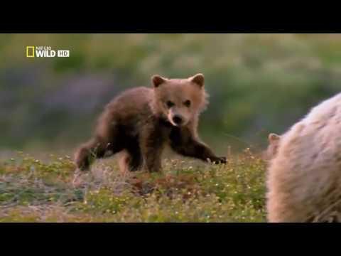 Экстремальная Аляска | Документальный фильм про Аляску| (National Geographic)