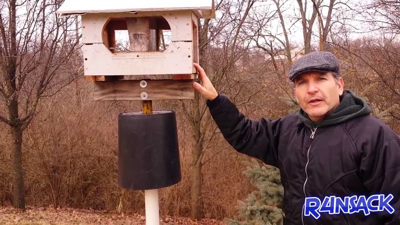 squirrels off how feeder keep the youtube watch to bird