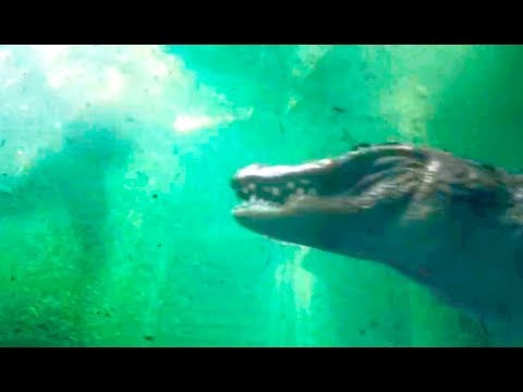 Infierno Bajo El Agua Trailer Español Youtube