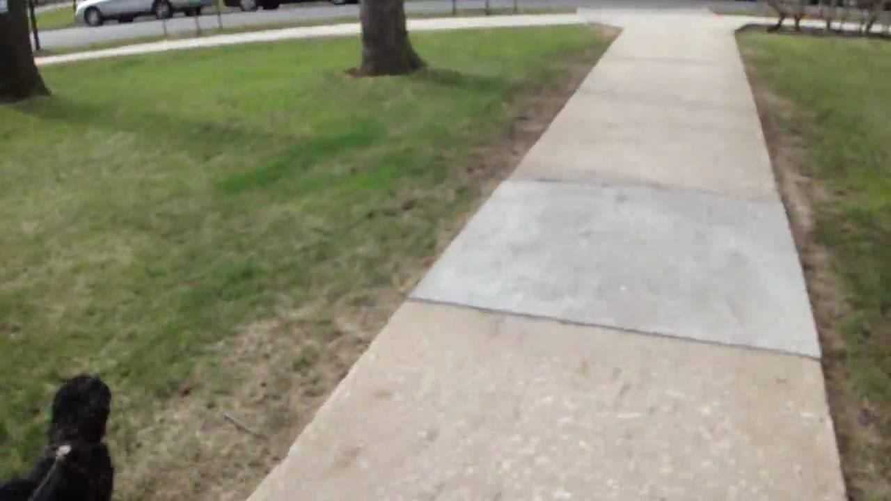 Dog Pees Cat Toy
