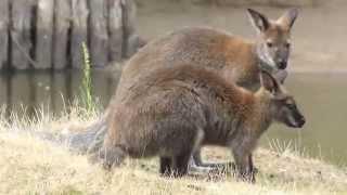 le jardin des kangourous  49170 la possonniére  49170