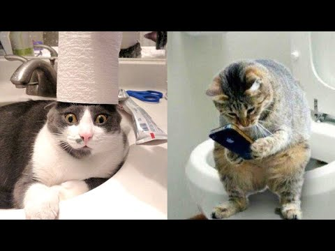 Funniest Animals – Best Of The 2020 Funny Animal Videos
