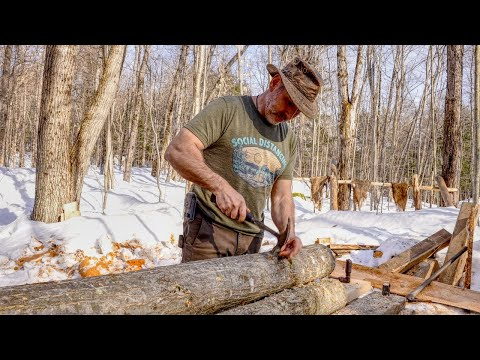 Growing Shiitake Mushrooms and Tapping Maple Trees, Spring 2021