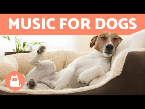 Pet Corner - MUSIC To Help Your DOG Fall Asleep🐶 💤 Relax and Relieve Anxiety!