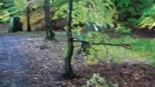 Autumn Forest Walk Faskally Near Pitlochry Highland Perthshire Scotland